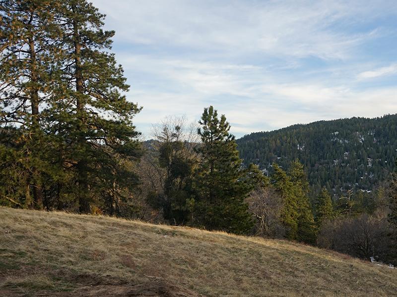 Thousand Pines Crestline A