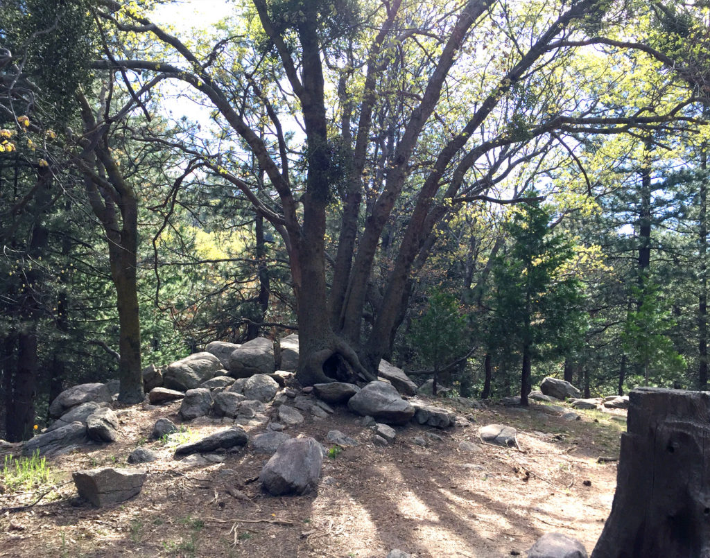 Thousand Pines Crestline B
