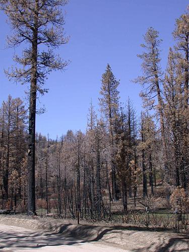 Burnt Forest - Fawnskin