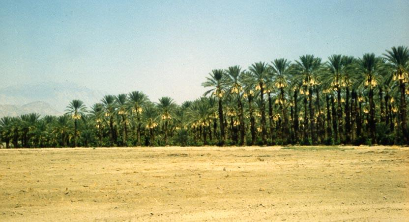 Date Palms Farm - Coachella Valley