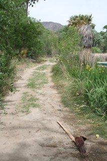 McKinney Ranch - Morongo Valley
