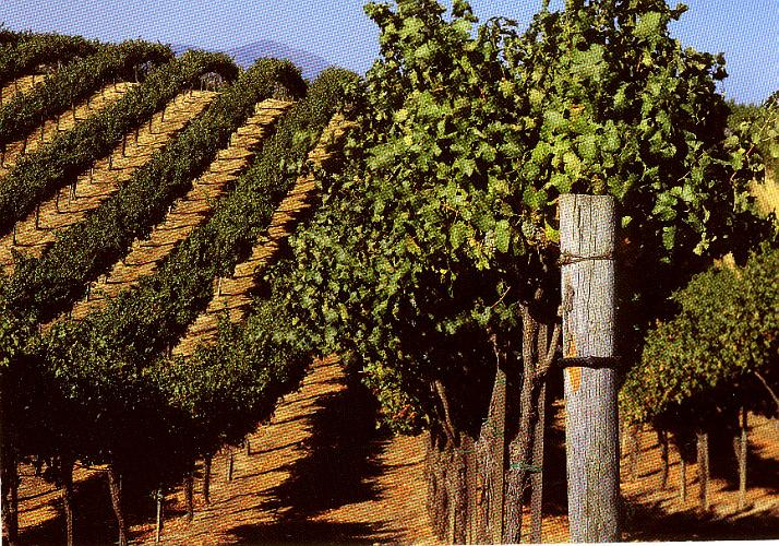 Mount Palomar Vineyard