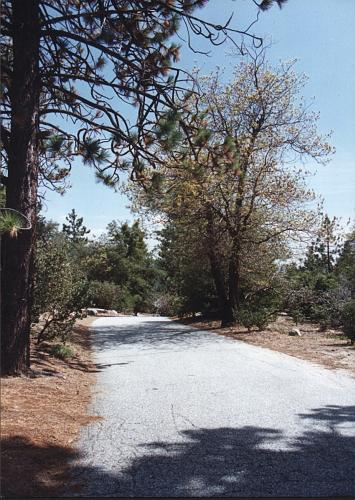 Riverside County Park Road - Idyllwild