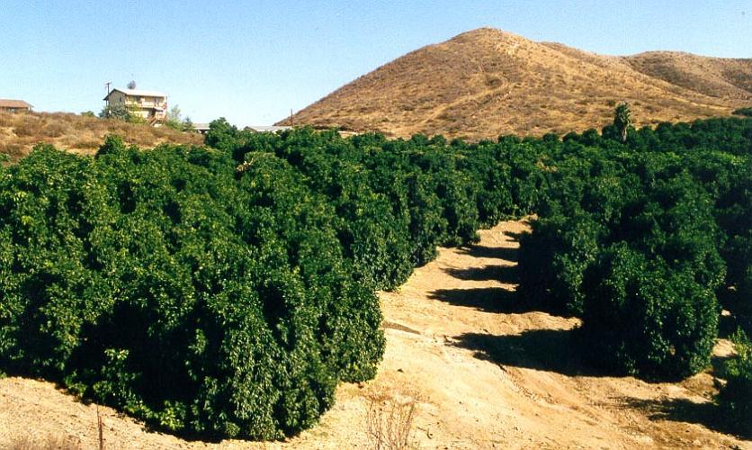 Sun City Orchard