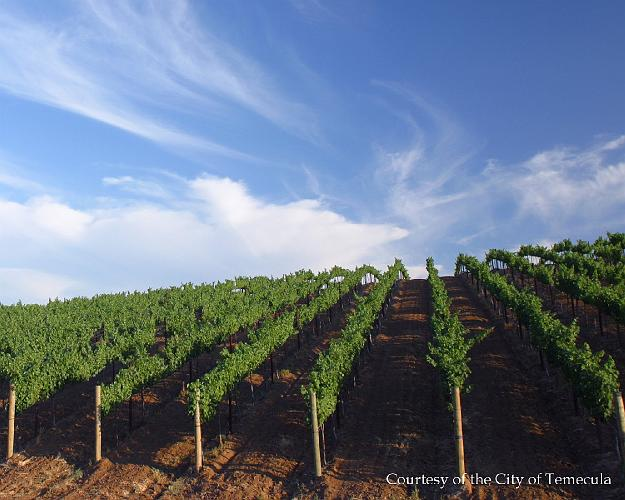 Temecula Vineyard