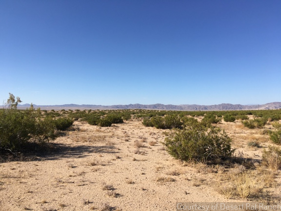 Desert Rat Ranch   Joshua Tree 03
