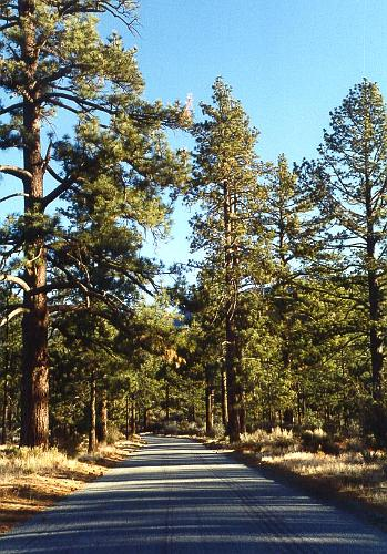 Hurkey Creek Park   Mountain Center
