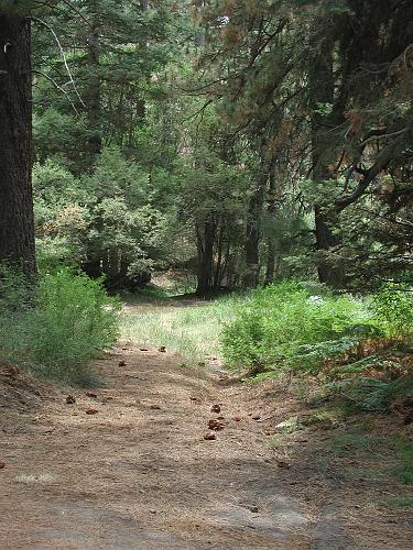 2N10 Trail - Big Bear