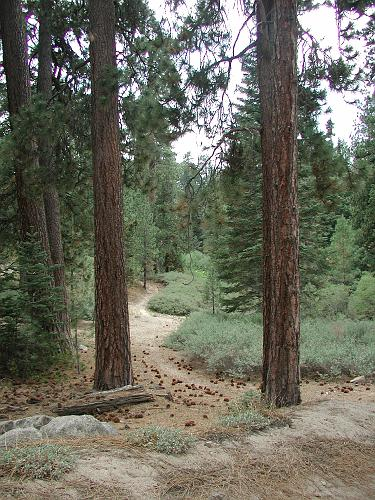 2N17 Trail - Big Bear