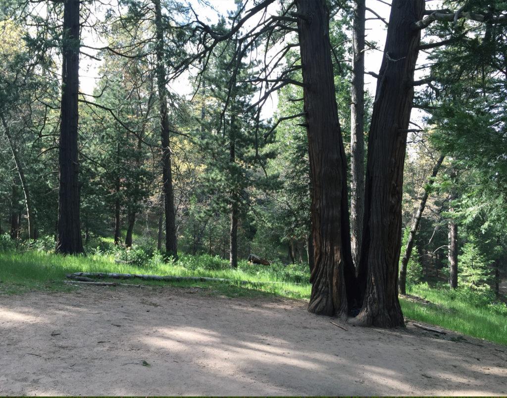 Thousand Pines Crestline C