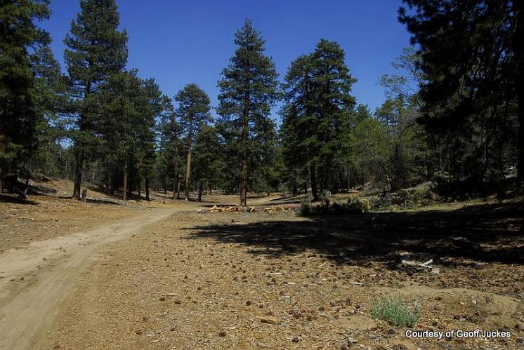 Camp Conrad Chinnock - Angelus Oaks