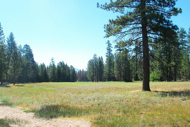 Camp Whittle - Big Bear