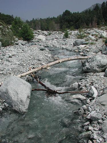 Forest Falls Creek - Forest Falls