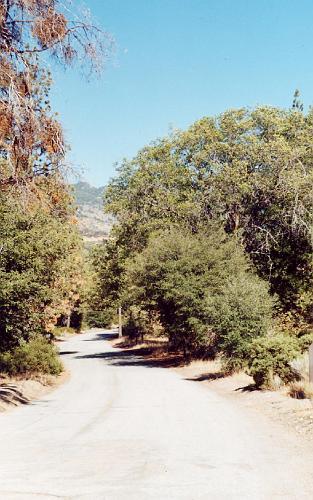 Glass Road - Angelus Oaks
