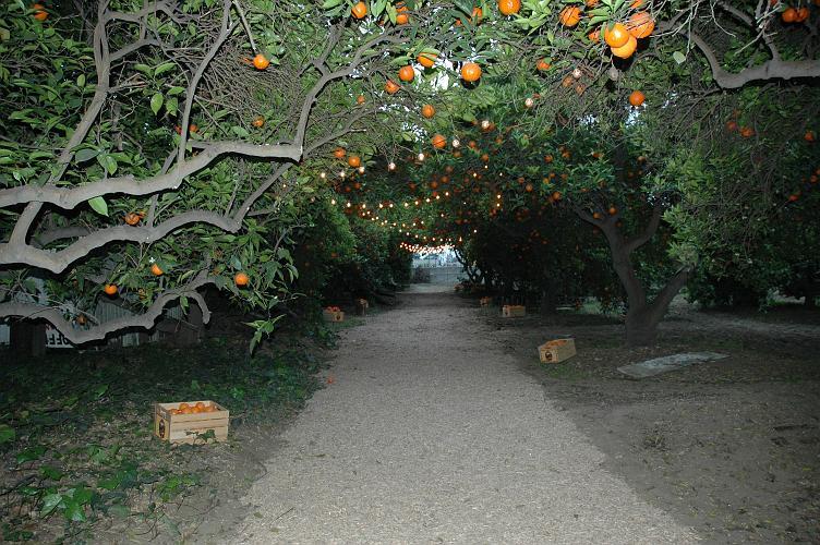 Historic Orange Grove - Montclair