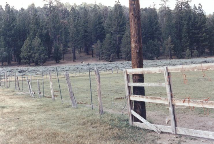Hitchcock Ranch - Big Bear Lake