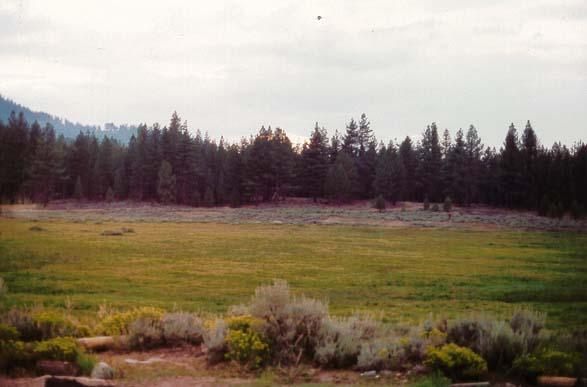 Holcomb Valley - Big Bear Lake