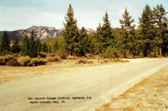 Apple Canyon - Idyllwild