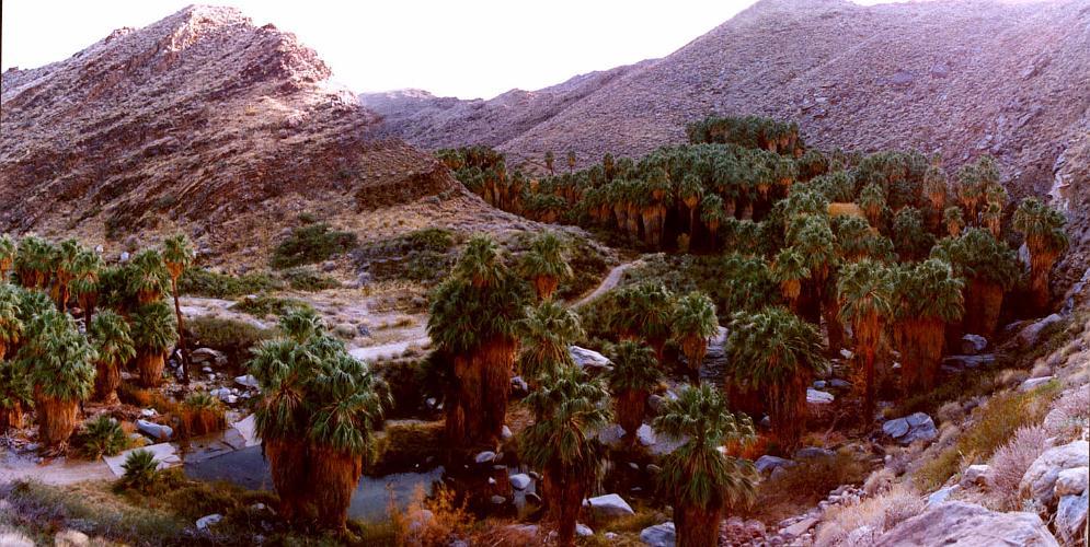 Palm Canyon - Palm Springs