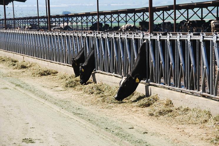 Scott Bors Dairy Farm - San Jacinto