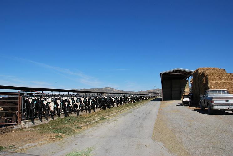 Scott Bros Dairy Farm - San Jacinto