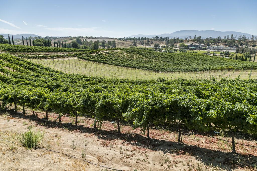 Hart Winery Temecula03