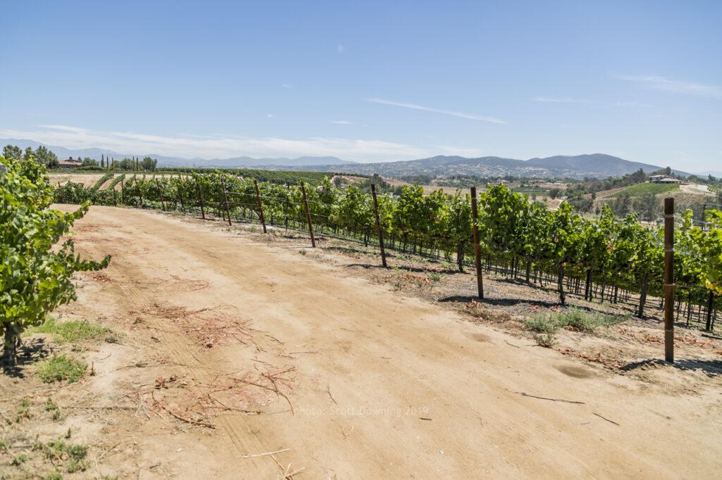 South Coast Winery Vineyard Rd   Temecula