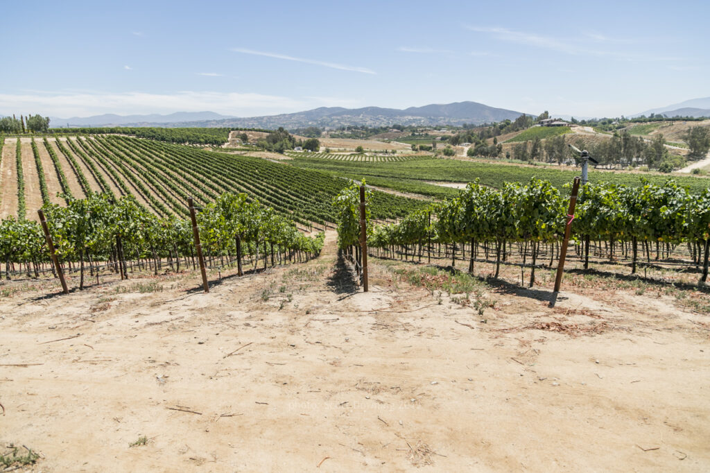 South Coast Winery Temeula